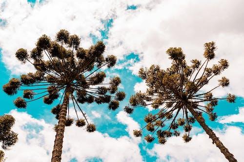 가지, 계절, 고요한의 무료 스톡 사진