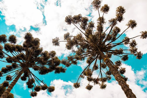 가지, 거대한, 계절의 무료 스톡 사진