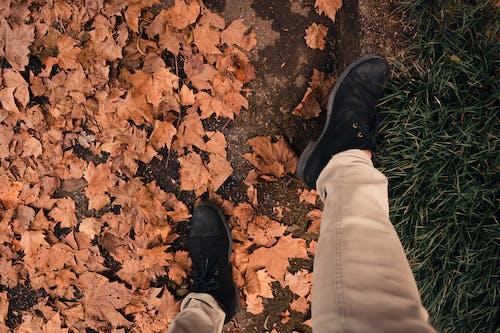 가을, 간, 갈색의 무료 스톡 사진