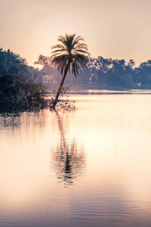 Základová fotografie zdarma na téma fotografie přírody, krajina, krása, lehký
