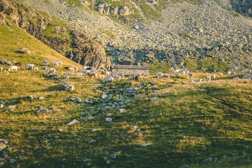 Бесплатное стоковое фото с вид, гора, дневной свет, долина