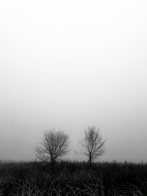 Free stock photo of a tree in the fog, almaty, art