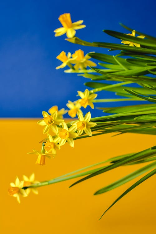Imagine de stoc gratuită din blur background, floră, flori