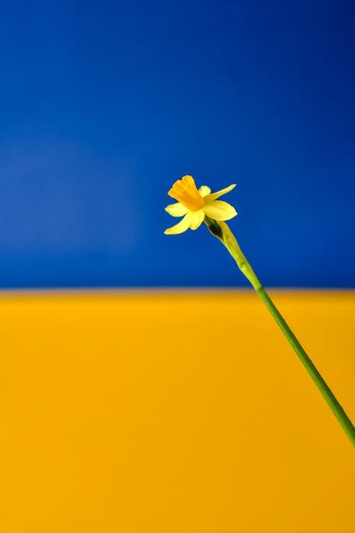 Kostnadsfri bild av blomma, flora, skärpedjup