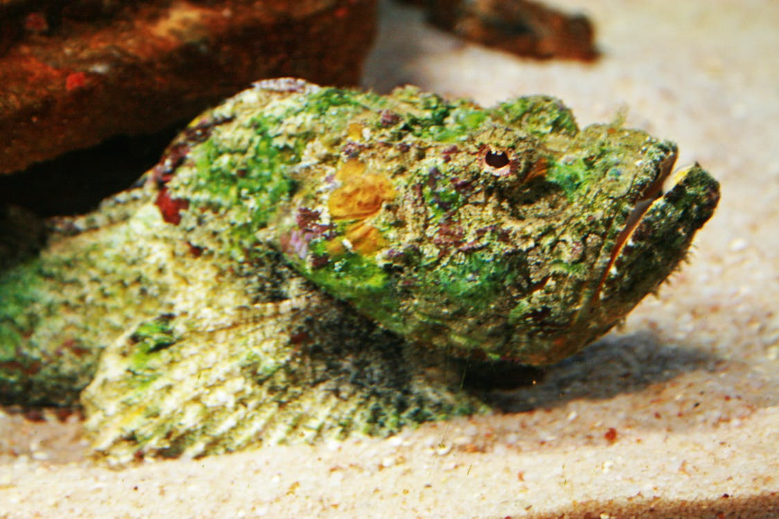 Stone fish (Foto: Unsplash/ Magda Ehlers)