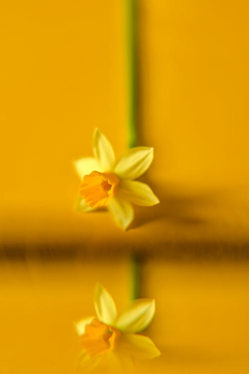 Imagine de stoc gratuită din blur background, floare galbenă, floră