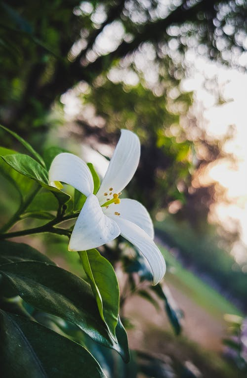 Free stock photo of flowers, nature beauty, nature landscape