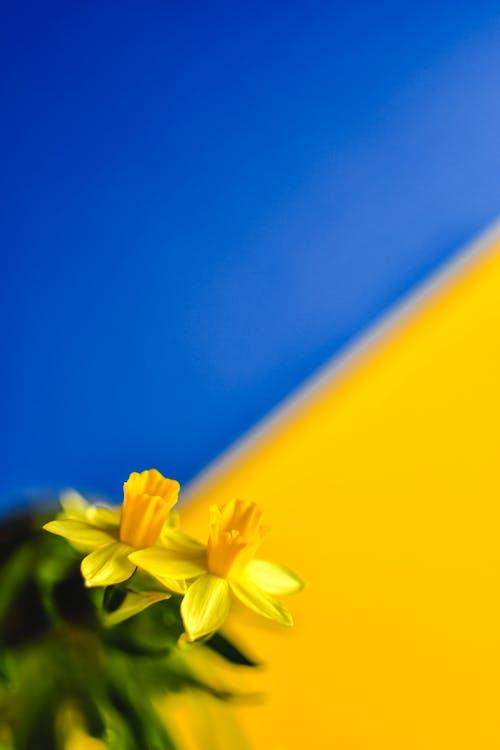 Imagine de stoc gratuită din blur background, floare, floră