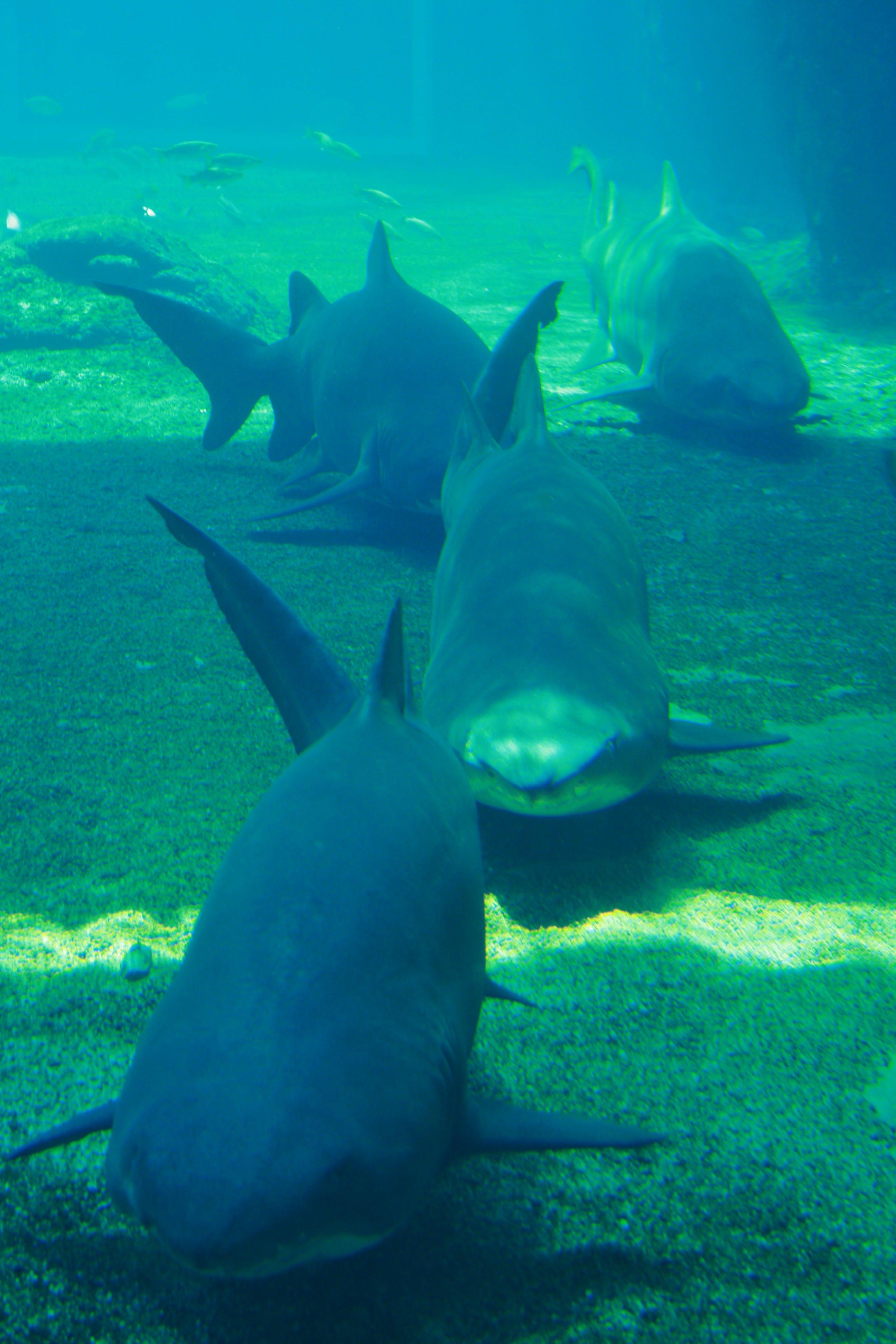 Free stock photo of animals, aquarium, dangerous, fishes