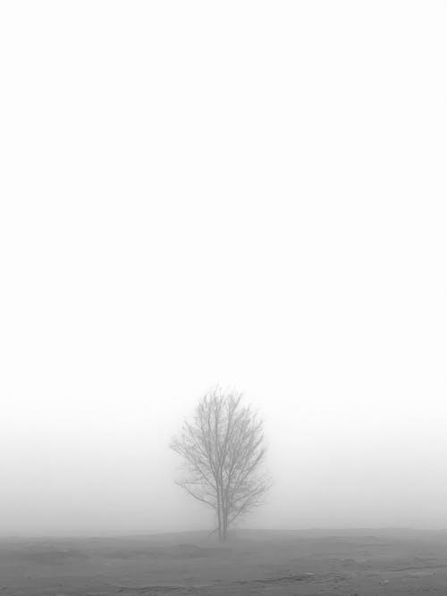 Free stock photo of a tree, almaty, esten