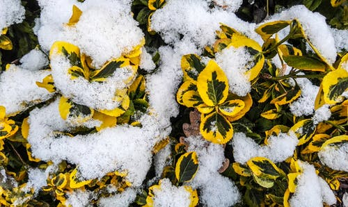 冬, 緑, 自然, 花の無料の写真素材