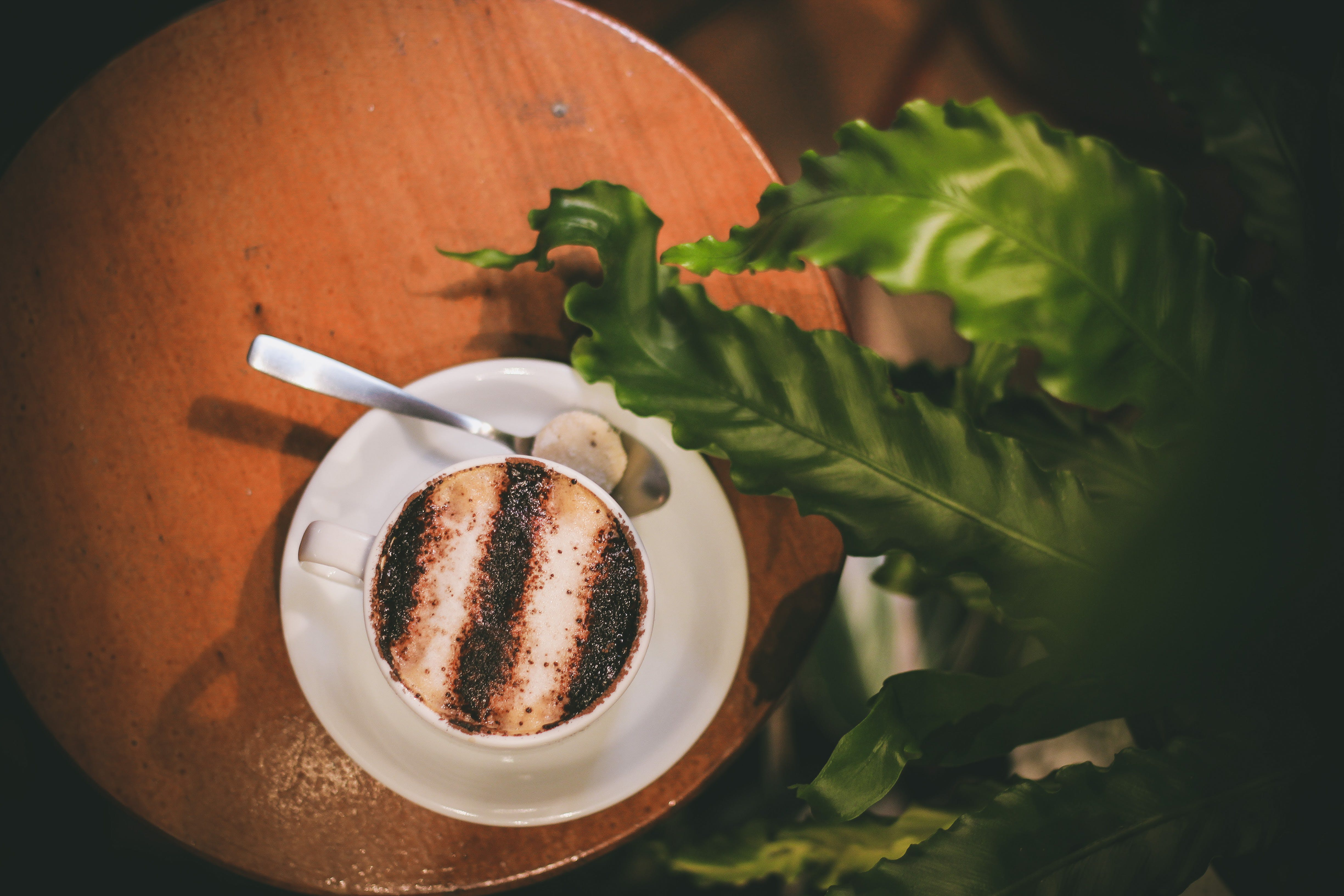 Free stock photo of coffee, cappuccino, plant, green