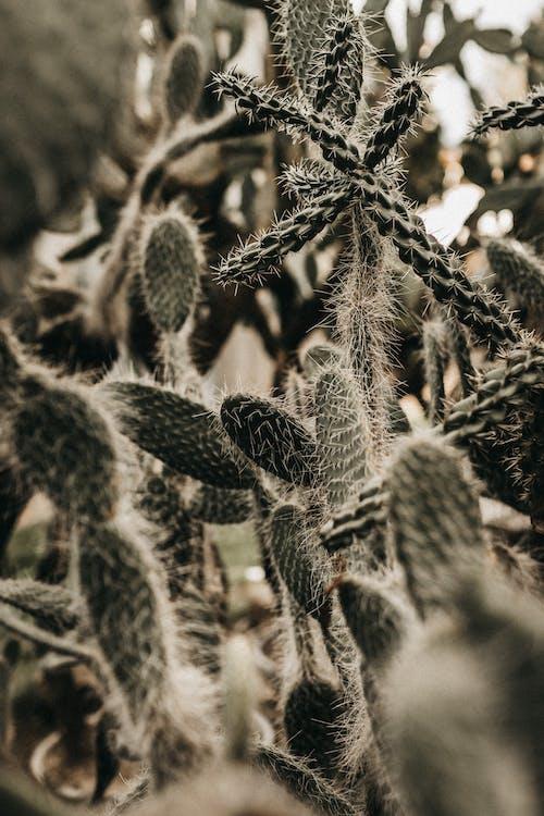 いろんな, エキゾチック, オーガニックの無料の写真素材