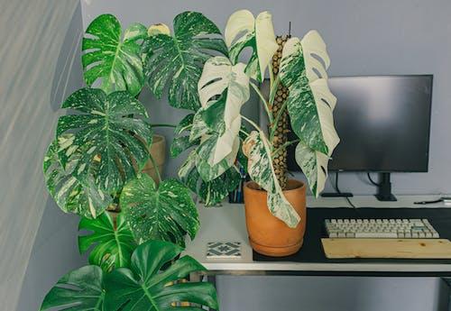 Green Plant on Orange Ceramic Pot