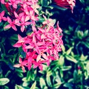 nature, flowers, shrub