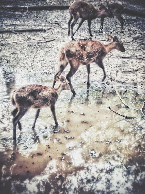 Základová fotografie zdarma na téma bahnitý, fotografie přírody, hnědá, indický