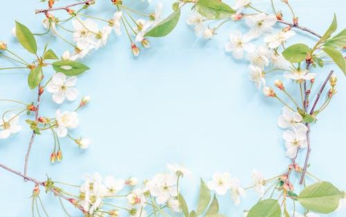 Fotos de stock gratuitas de amable, angiospermas, aroma