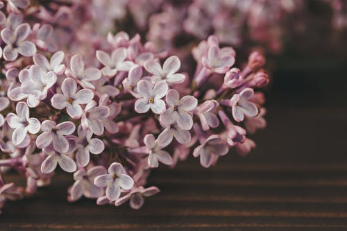 Blossoming Syringa sprig with tender petals and pleasant scent on wooden surface on blurred background