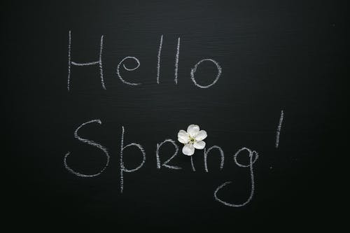 Hello Spring inscription with blooming flower on black background