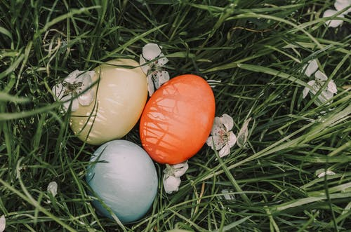 Painted eggs on grass with blooming flowers on Easter Day