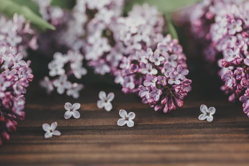 Blossoming Syringa sprigs with delicate flowers and pleasant aroma on wooden surface on blurred background