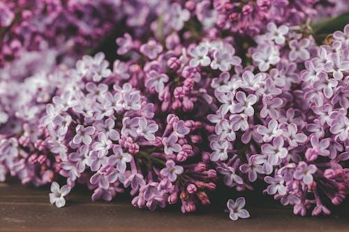 Bunch of fresh Syringa vulgaris flowers arranged on table