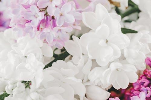 Bunch of delicate Syringa vulgaris and Jasminum sambac flowers