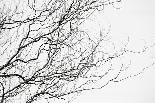 From below of black and white curvy branches of leafless tree under cloudy sky