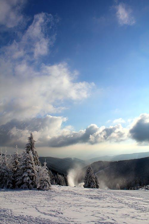 açık hava, ağaçlar, bulutlar, bulutlu içeren Ücretsiz stok fotoğraf