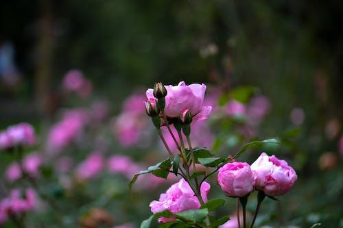 Free stock photo of beautiful flowers, green, nature
