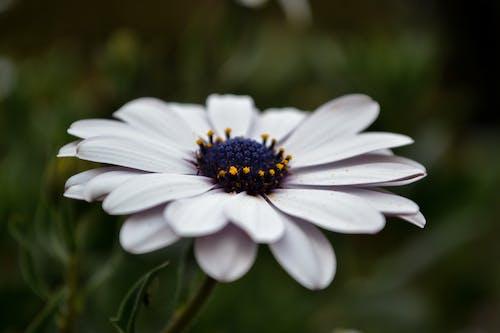 Free stock photo of beautiful flowers, close, dark green