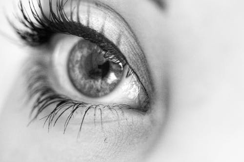 Imagine de stoc gratuită din alb-negru, gene, glob ocular, prim-plan