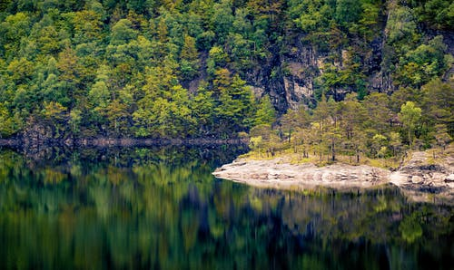 Kostenloses Stock Foto zu bäume, friedlich, holz, hübsch