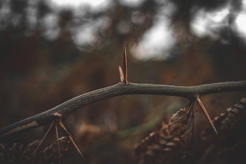 Photos gratuites de bokeh, branche, brun
