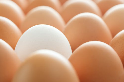 Background of whole chicken eggs in rows