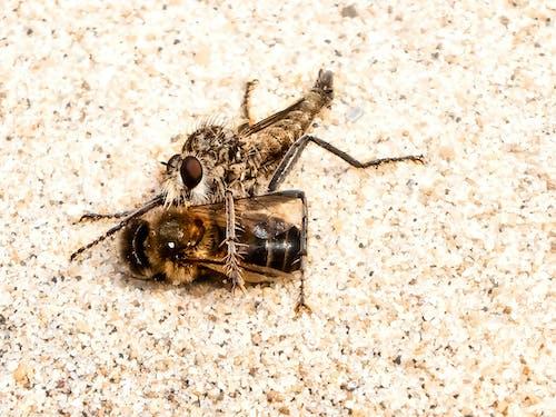 Free stock photo of animal eye, at the beach, bee