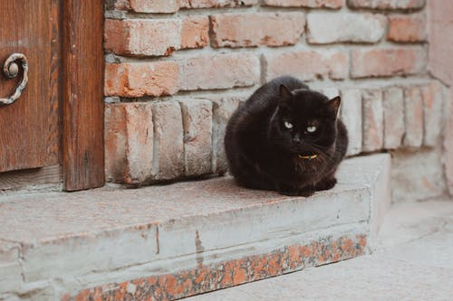 Full body cute fluffy black cat with collar sitting on doorstep of rural brick house and looking away
