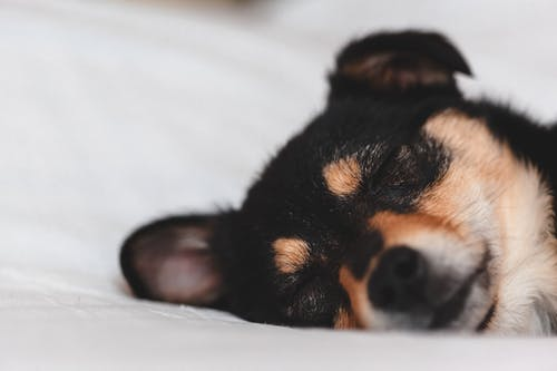 Adorable puppy sleeping on soft bed
