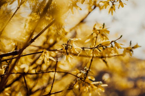Thin branches of blooming tree covered with small tender yellow flowers in wild nature on blurred background on summer day