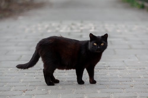 Cute cat with fluffy black fur and yellow eyes standing on paved sidewalk on street in city on blurred background