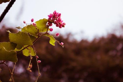 Základová fotografie zdarma na téma fotografie přírody, krásné květiny, květiny, kytka