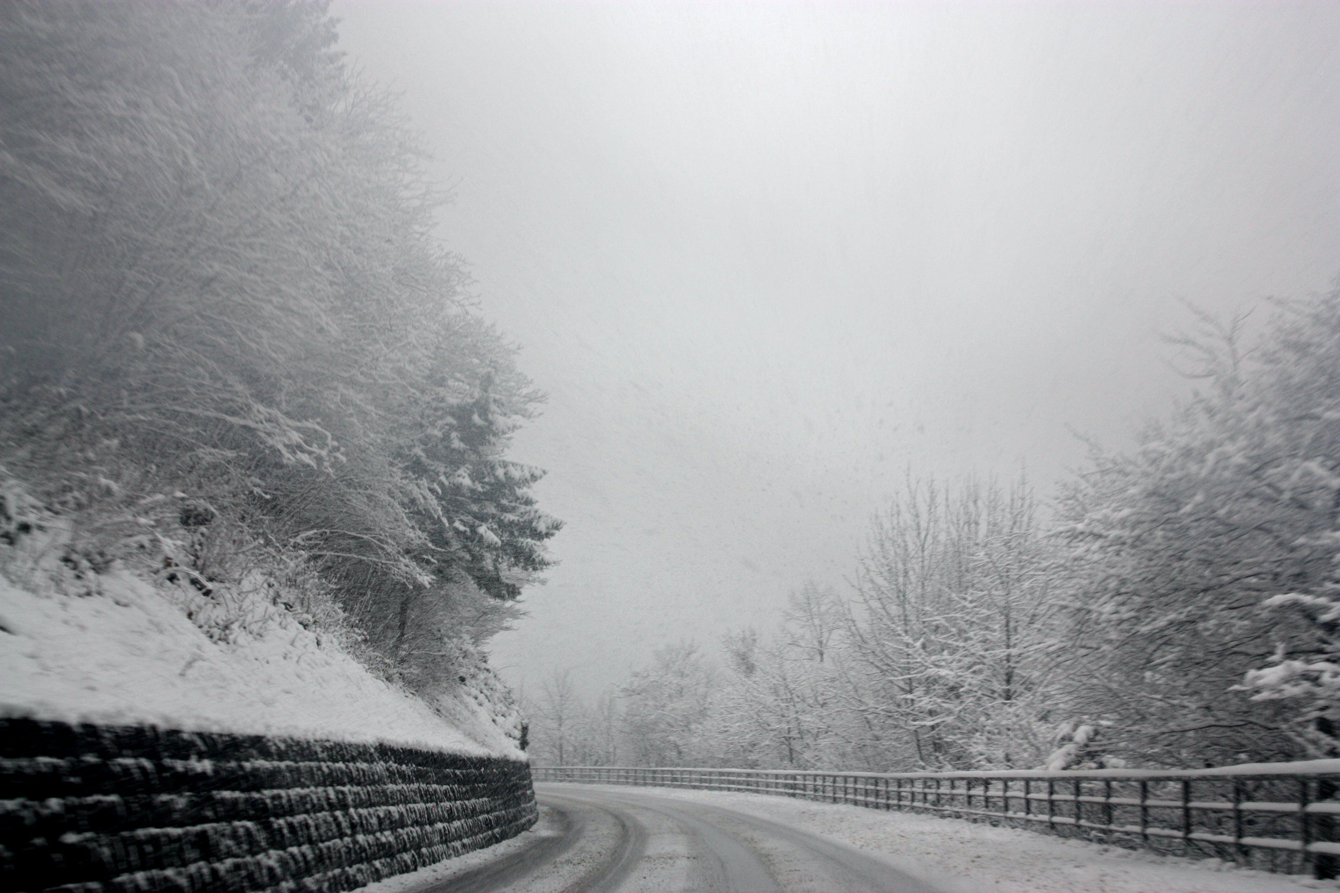Základová fotografie zdarma na téma borovice, černobílý, dopravní systém, jehličnany