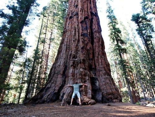 abd doğa, abd milli parkı, ağaç, boyut farkı içeren Ücretsiz stok fotoğraf