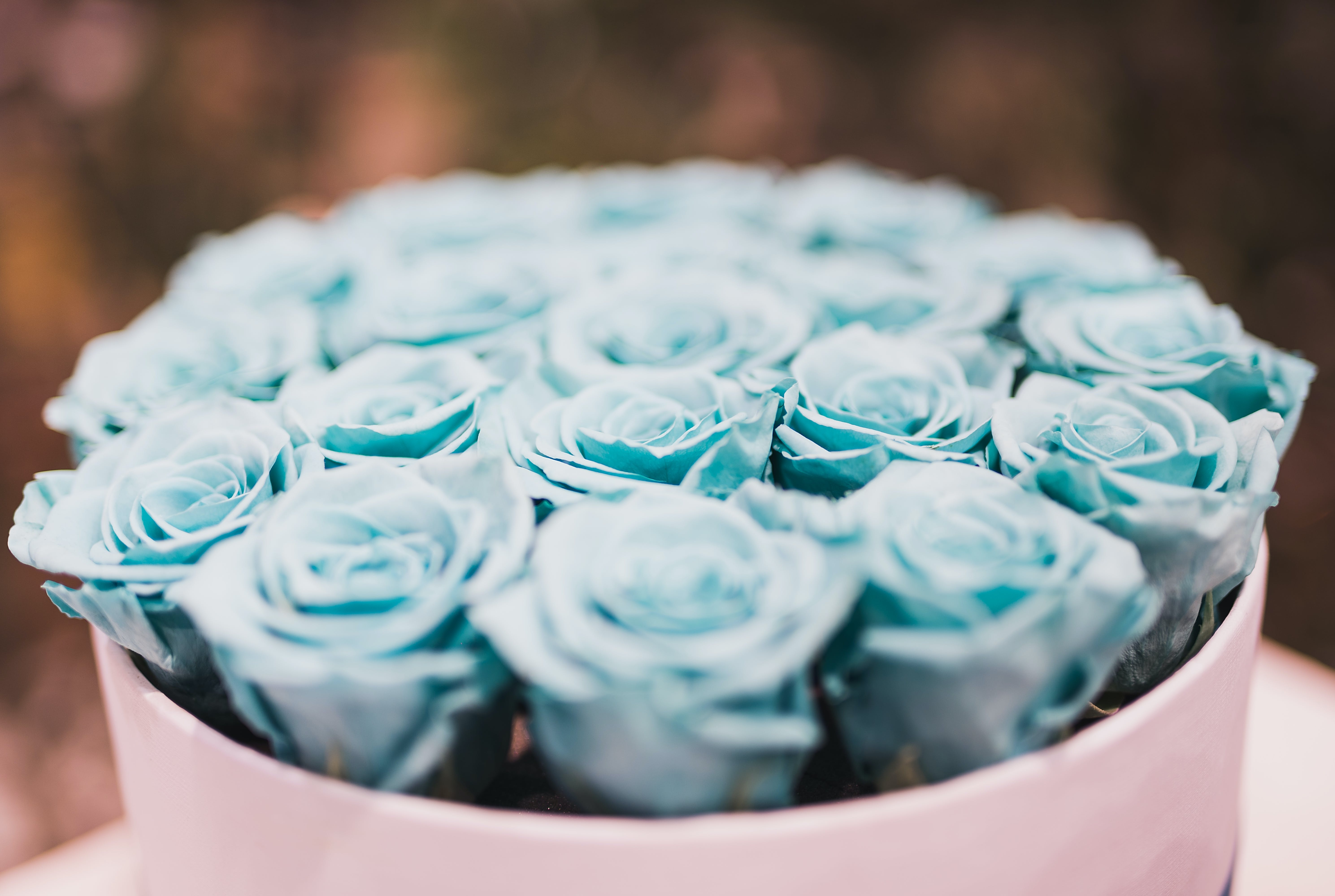 Blue Rose Bouquet Collections