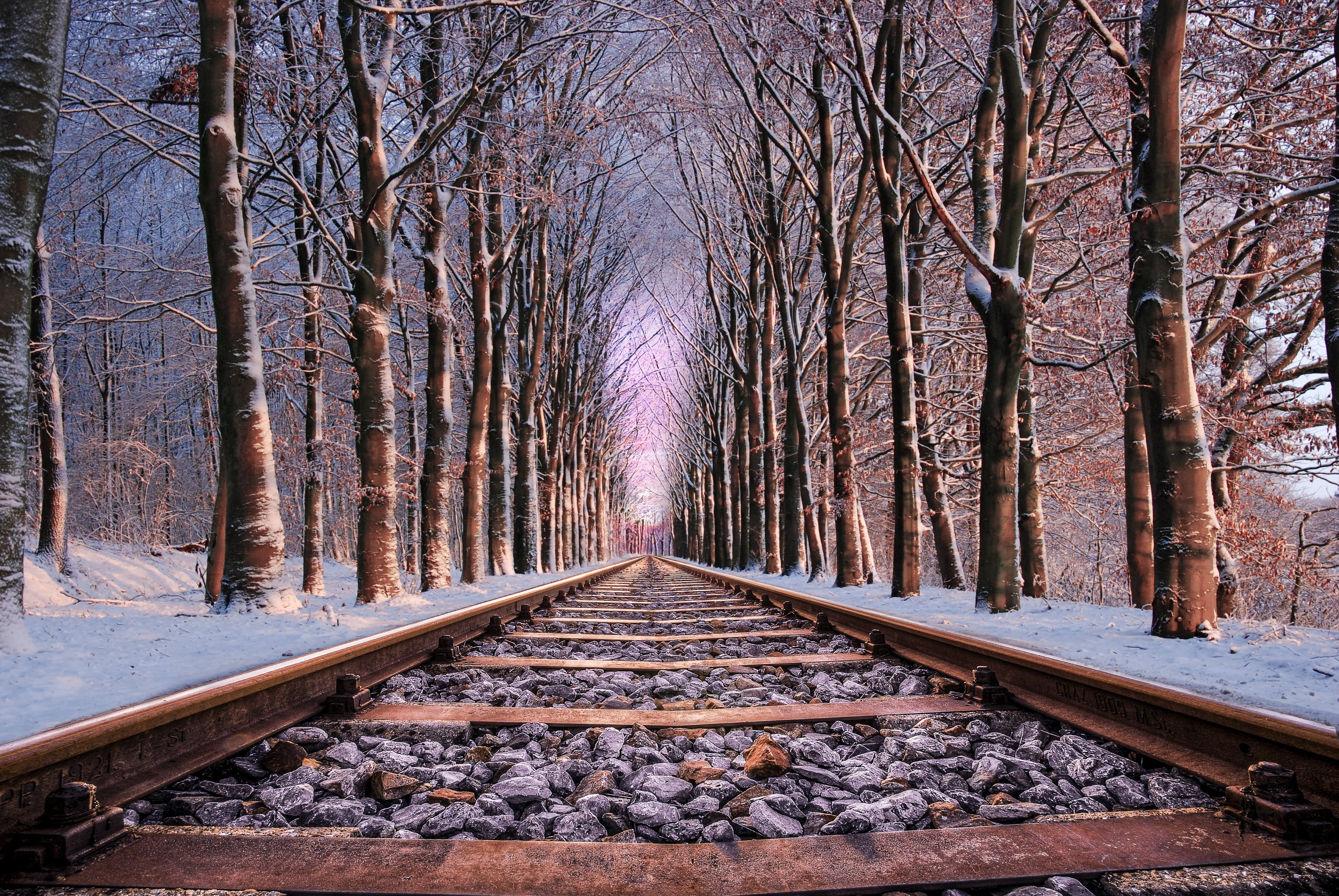 Railroad in Between the Trees