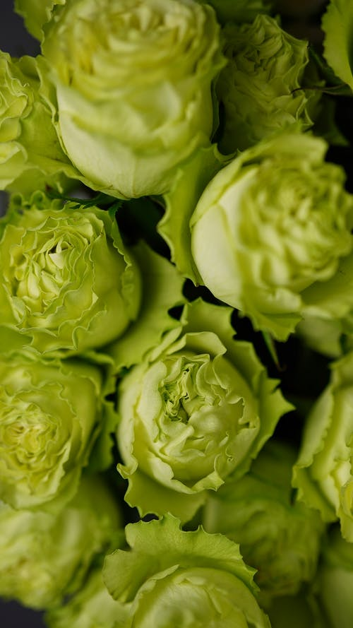 From above of lush green roses with gentle thin petals in bouquet for occasion
