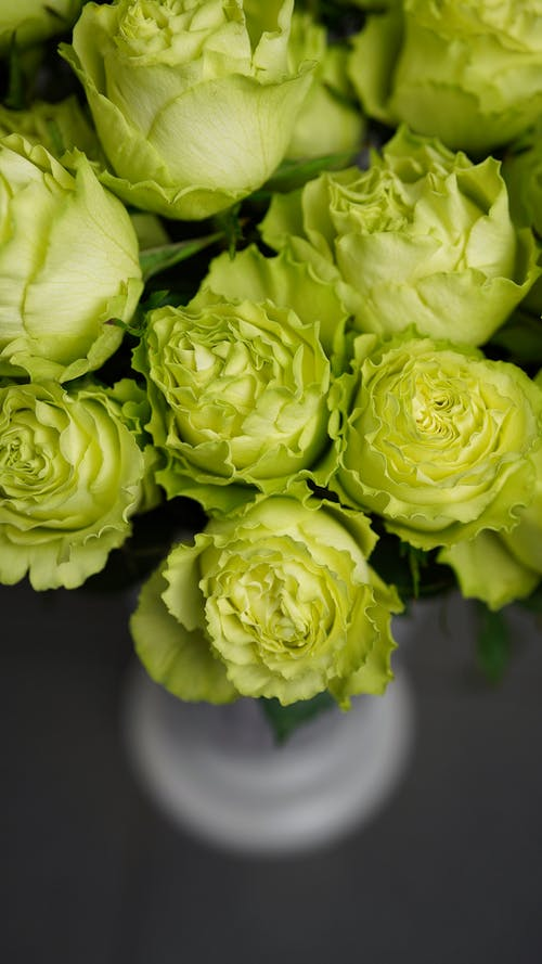 From above of abundance fresh green roses with blooming buds placed in white vase in light room on blurred background