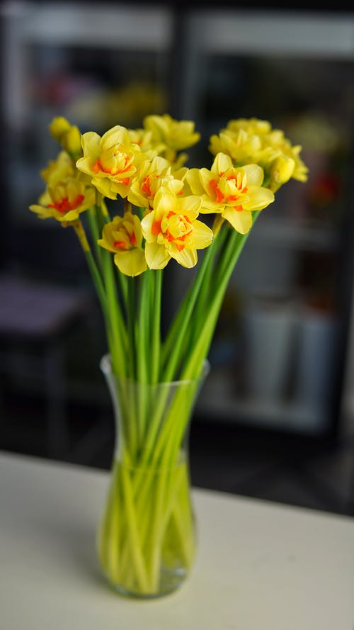 Bunch of fresh yellow narcissus flowers with green stems placed in vase on table in light room on blurred background