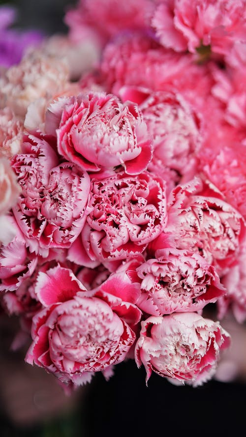 Blooming peonies near colorful bouquets