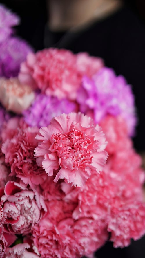 Fresh bouquet of colorful blooming chrysanthemums flowers against blurred dark background in daylight